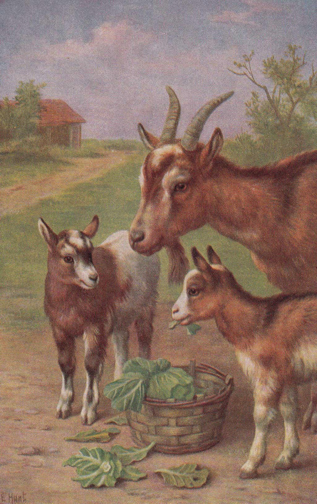 коза с козлятами веретенникова картинки отлично подойдёт