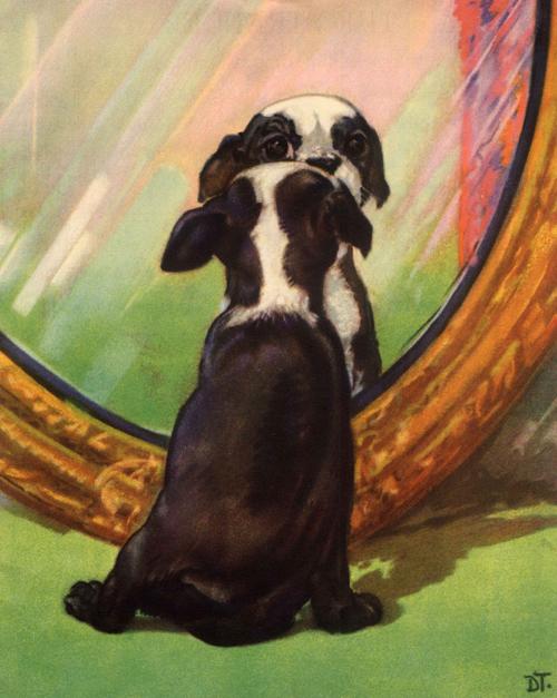Puppies-3-WEB