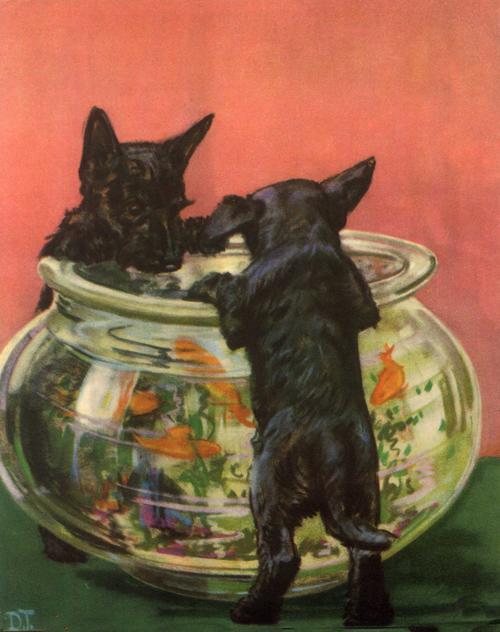 Puppies-5-WEB