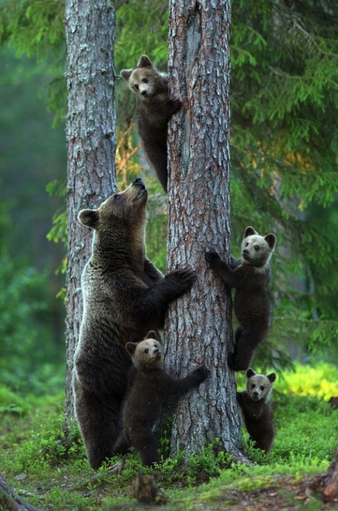 Eric-Mandre-Bears