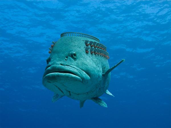ML fish
