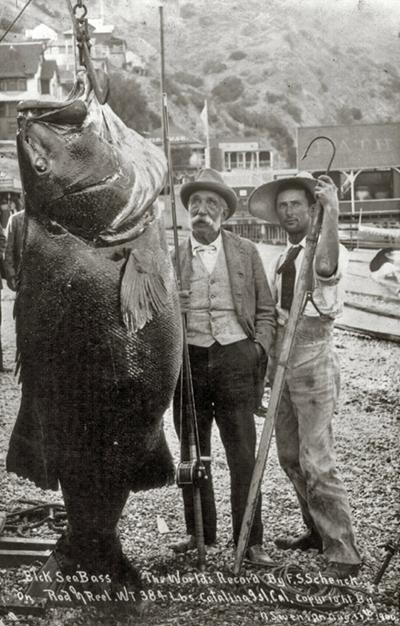B 1900 Sea Bass