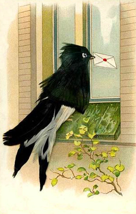 Mail Bird