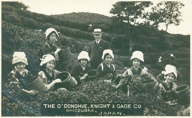 Tea O'Donohue Knight Gage Co