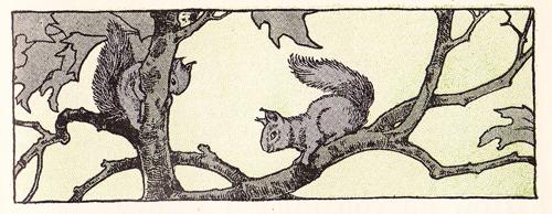 MEW Squirrels