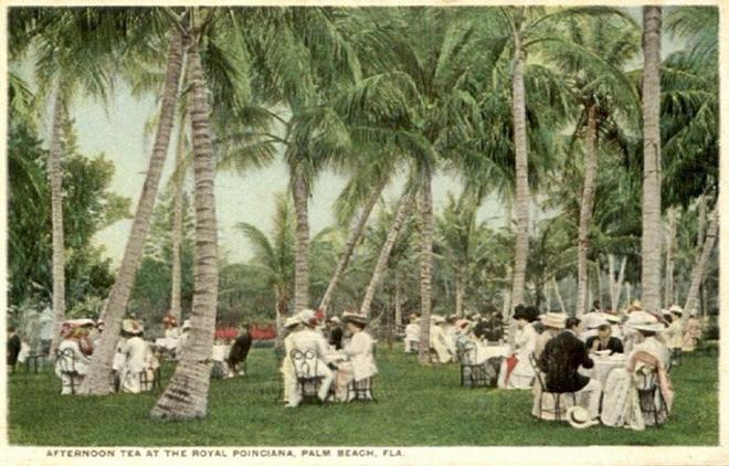 Tea Palms