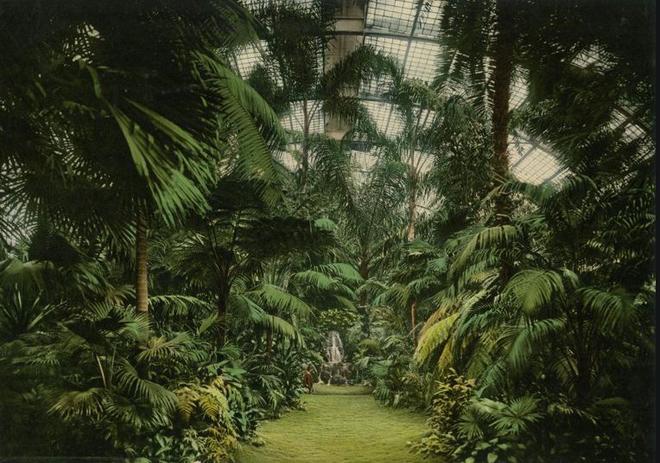 Palm Garden.JPG